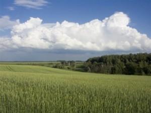 сведения о ранее учтенных земельных участках