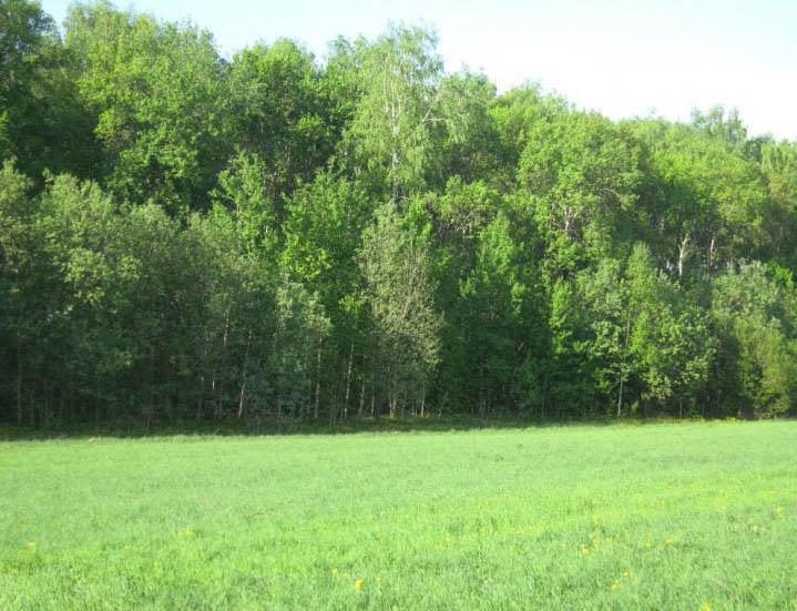 Земельный участок 19,5 соток, 49 км от МКАД по Каширскому шоссе, п. Лисичкино