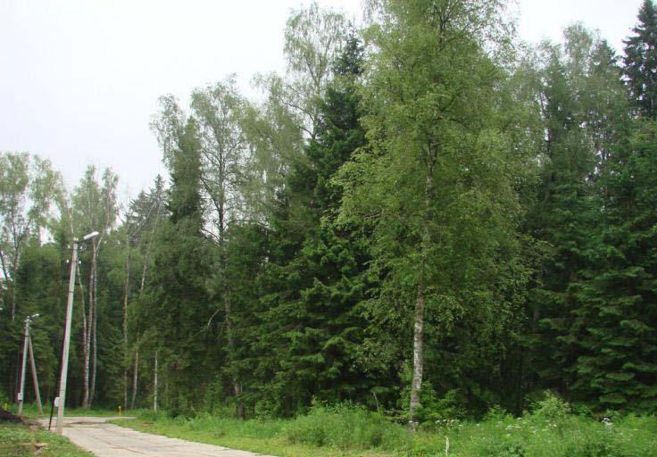 Земельный участок 60,2 соток, 37 км от МКАД по Новорижскому шоссе, д. Подпорино