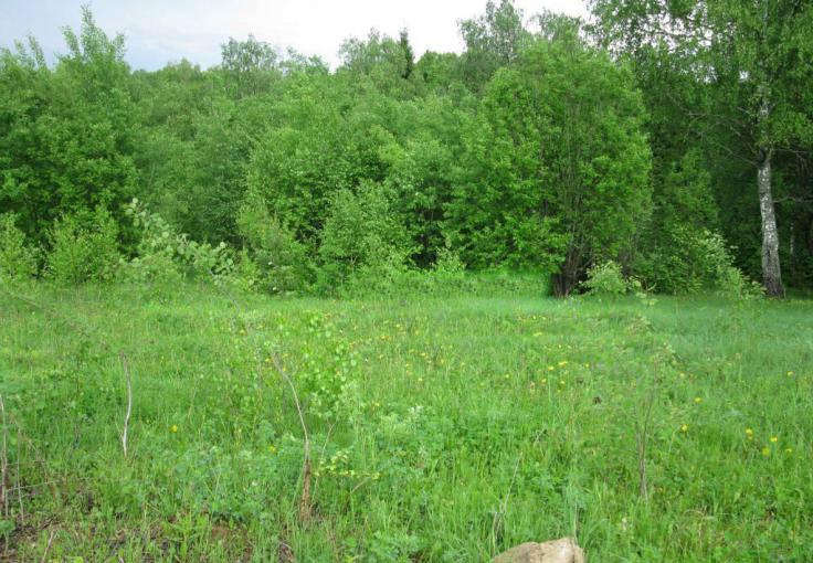 Земельный участок 53 соток, 35 км от МКАД по Симферопольскому шоссе, д. Прохорово