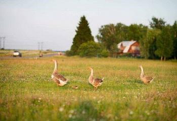 Земельный участок 10 соток, 28 км от МКАД по Новокаширскому шоссе, п. Фламандия
