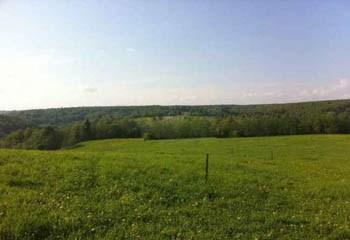 Земельный участок 300 соток, 37 км от МКАД по Дмитровскому шоссе, д. Горки