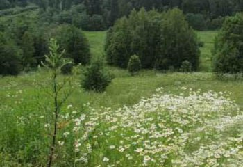 Земельный участок 39.5 соток, 45 км от МКАД по Дмитровскому шоссе, д. Гаврилково