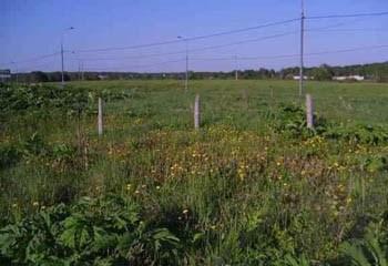 Земельный участок 6 соток, 22 км от МКАД по Дмитровскому шоссе, д. Сухарево