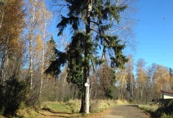 Земельный участок 6 соток, 17 км от МКАД по Дмитровскому шоссе, г. Мытищи