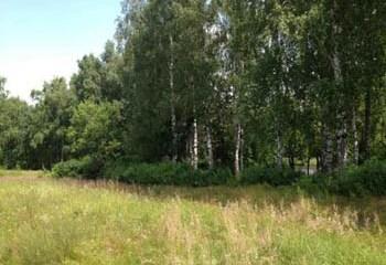 Земельный участок 15 соток, 35 км от МКАД по Дмитровскому шоссе, п. Деденево