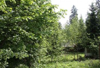 Земельный участок 12 соток, 27 км от МКАД по Дмитровскому шоссе, д. Лупаново