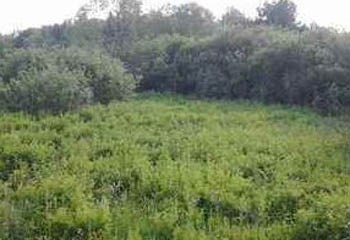 Земельный участок 30 соток, 48 км от МКАД по Дмитровскому шоссе, д. Протасово
