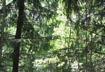 Земельный участок 18 соток, 27 км от МКАД по Дмитровскому шоссе, п. Ермолино