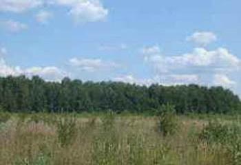 Земельный участок 15 соток, 46 км от МКАД по Дмитровскому шоссе, д. Новинки