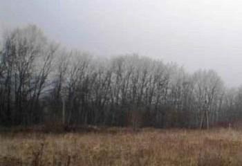 Земельный участок 390 соток, 42 км от МКАД по Дмитровскому шоссе, д. Минеево