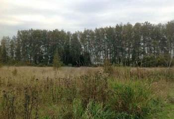 Земельный участок 29 соток, 46 км от МКАД по Дмитровскому шоссе, д. Протасово
