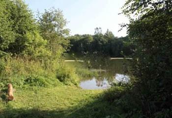 Земельный участок 12 соток, 55 км от МКАД по Дмитровскому шоссе, д. Сергейково