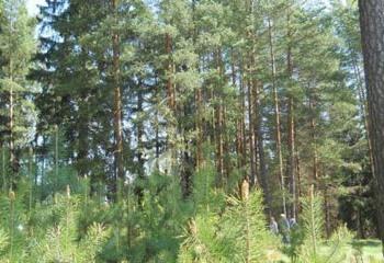 Земельный участок 634 соток, 90 км от МКАД по Дмитровскому шоссе, д. Ольховик