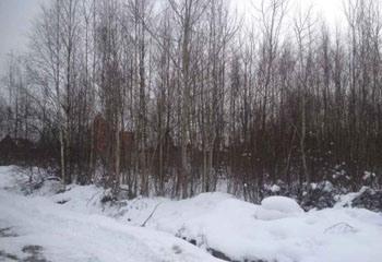 Земельный участок 20 соток, 25 км от МКАД по Дмитровскому шоссе, д. Рыбаки