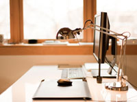 Компьютерная мышь для дома и офиса