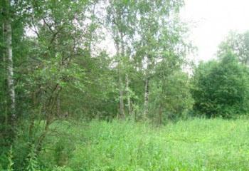 Земельный участок 25 соток, 27 км от МКАД по Дмитровскому шоссе, д. Тефаново
