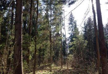 Земельный участок 30 соток, 40 км от МКАД по Дмитровскому шоссе, д. Сазонки
