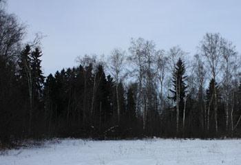 Земельный участок 30 соток, 58 км от МКАД по Дмитровскому шоссе, с. Семеновское