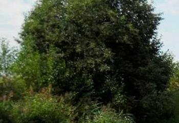 Земельный участок 5 соток, 50 км от МКАД по Дмитровскому шоссе, г. Дмитров