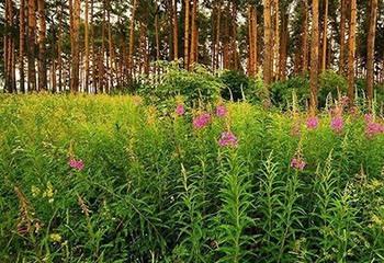 Земельный участок 4100 соток, 20 км от МКАД по Дмитровскому шоссе, д. Рыбаки