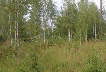 Земельный участок 15 соток, 90 км от МКАД по Дмитровскому шоссе, г. Талдом